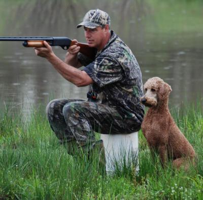 HR  - Standard Poodle Hunting Dog Pictures
