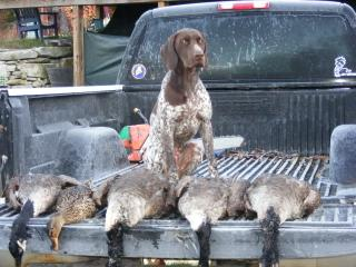 Riley's first hunting season - German Shorthaired Pointer Hunting Dog Pictures