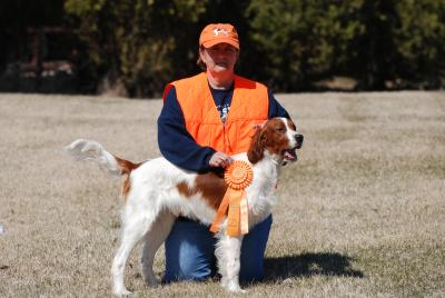First Junior Hunter pass - Irish Red and White Setter Hunting Dog Pictures
