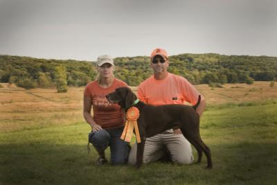 VERSATILE CHAMPION GSP ADDS MASTER HUNTER TITLE - German Shorthaired Pointer Hunting Dog Pictures