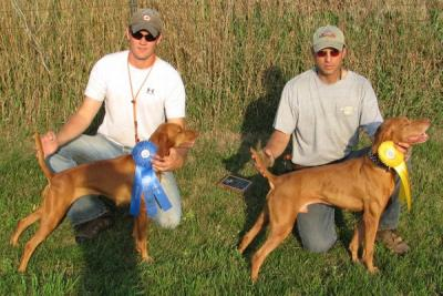 Rampaige Earns Field Champion Title - Vizsla Hunting Dog Pictures