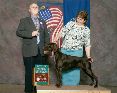 Mi Karma's newest GSPCA VC qualifier - German Shorthaired Pointer Hunting Dog Pictures