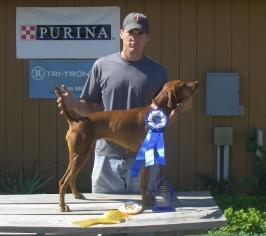 Rampaige Finishes Amateur Field Championship - Vizsla Hunting Dog Pictures
