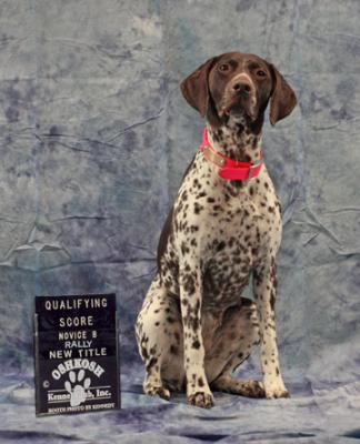 Knottypine's UKC Rally Novice title - German Shorthaired Pointer Hunting Dog Pictures