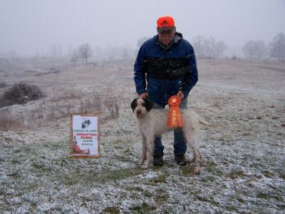 JUNIOR HUNT TEST TITLE for PUREPOINT FIELD LEGEND - German Wirehaired Pointer Hunting Dog Pictures