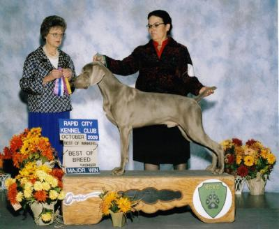 New AKC Champion - Weimaraner Hunting Dog Pictures