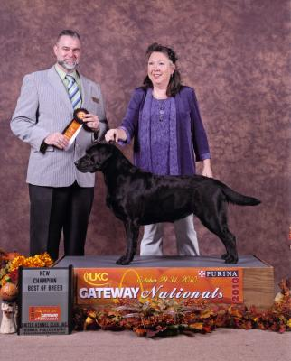 New UKC-Champion - Labrador Retriever Hunting Dog Pictures