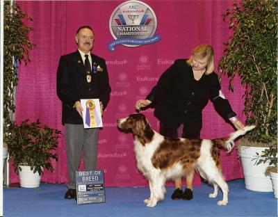 Eukanuba Breed Win - Irish Red and White Setter Hunting Dog Pictures