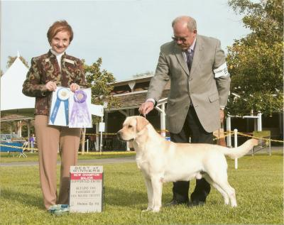 New Lab Champion - Labrador Retriever Hunting Dog Pictures