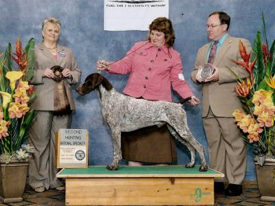 New AKC Grand Champion - German Shorthaired Pointer Hunting Dog Pictures