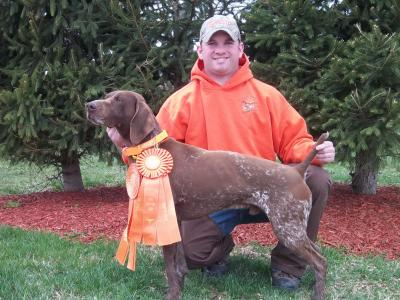 Four Straight for his Title! - German Shorthaired Pointer Hunting Dog Pictures