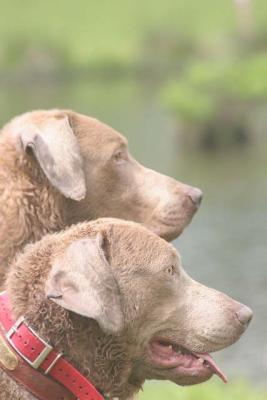 New AKC Senior Hunter - Chesapeake Bay Retriever Hunting Dog Pictures