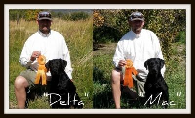 2011 Master National Qualifiers! - Labrador Retriever Hunting Dog Pictures