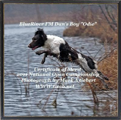 Nice job bud - English Springer Spaniel Hunting Dog Pictures