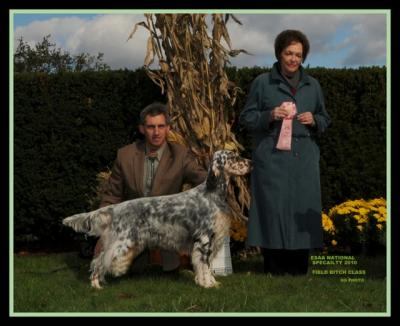 GRAND CHAMPION EDITIONS NAVIGATOR ,MASTER HUNTER - English Setter Hunting Dog Pictures