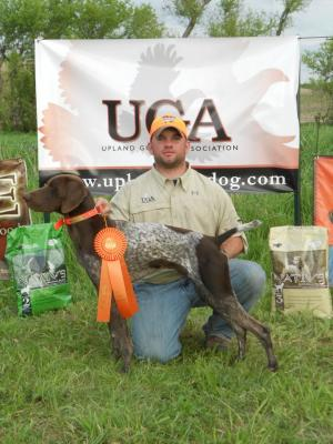Master Hunter and Gundog Advanced Titled by 17 mon - German Shorthaired Pointer Hunting Dog Pictures