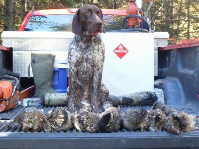 Fenton River Morning Dew Petemoss  - German Shorthaired Pointer Hunting Dog Pictures