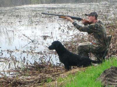 Hunting Retriever Title - Labrador Retriever Hunting Dog Pictures