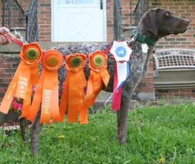 First Junior Hunter - German Shorthaired Pointer Hunting Dog Pictures