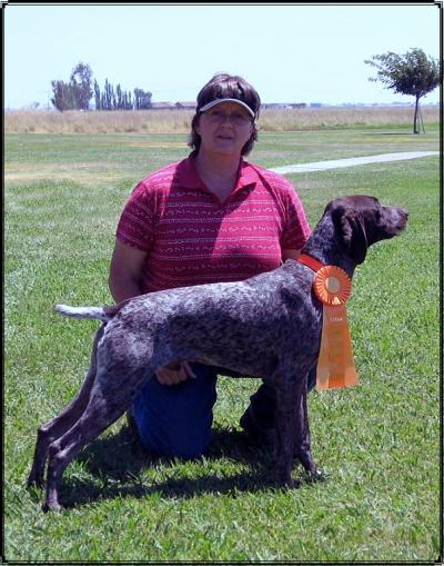 New MH title - German Shorthaired Pointer Hunting Dog Pictures
