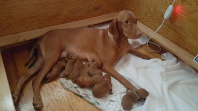 Dam with her puppies