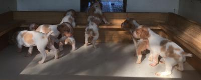 Litter pic 4 weeks