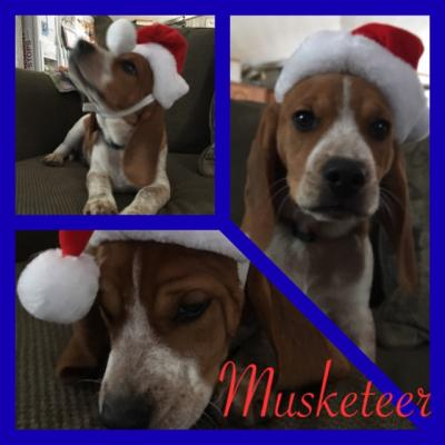 Musketeer (male)