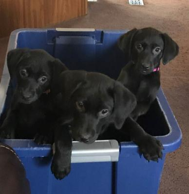 pups still available