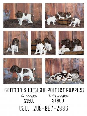 7 weeks old 