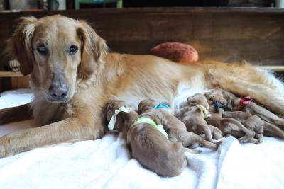 Jewel with pups