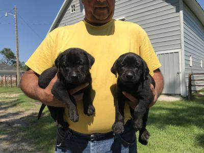Pups For Sale Litter #2
