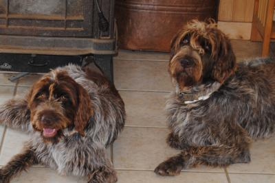 Moose & Scout The Grandparents