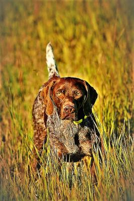 Sire-Mr.E, bird finder sire of National Dog of the Year