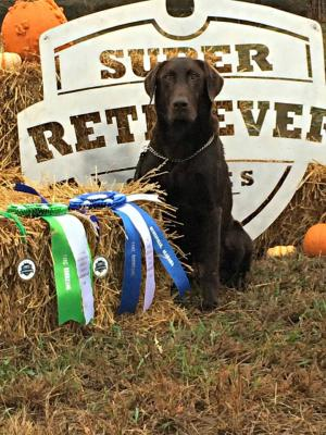 Jeter's G.Sire:  GRHRCH, SRSACC, 6x SRSAC Spring River's Yankee Captain, (Jeter)  3x MH, QAA, 2015 Master Nat'l Hall of Fame and The 2018 Choc. Lab of the Year!!