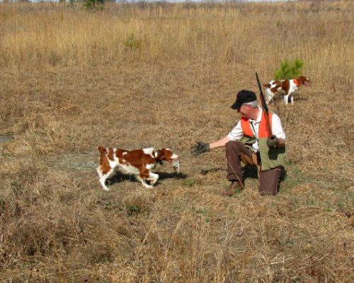 Austin Creek Farms - Alabama American Brittany Breeders