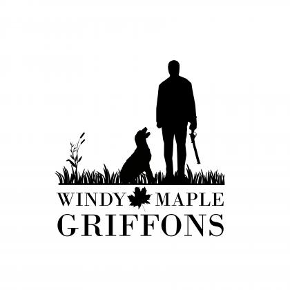 Windy Maple Griffons