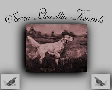 Sierra Llewellins