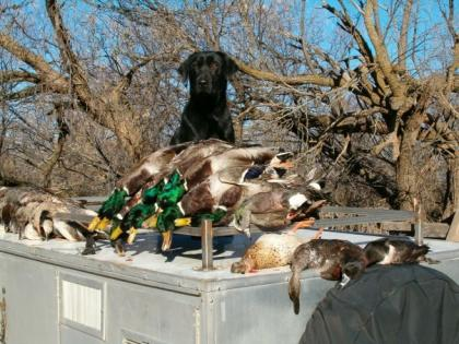 Bull Valley Retrievers