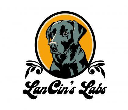 LanCins Labs L.L.C.