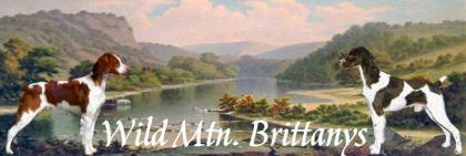 Wild Mtn Brittanys