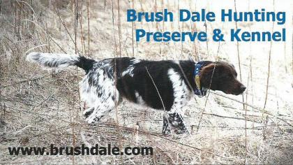 Brush Dale Kennel