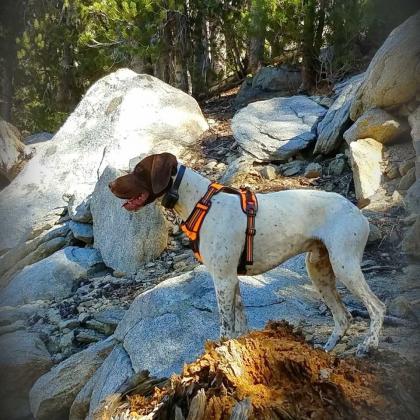 Battle Born Gun Dogs