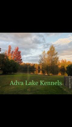 Adva Lake Kennel