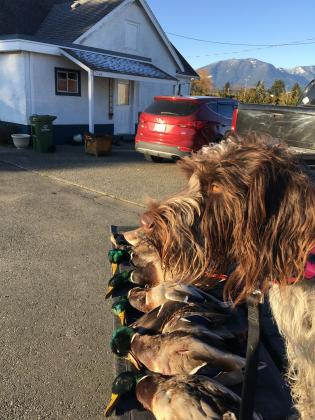 Grizzly Ridge Wirehairs