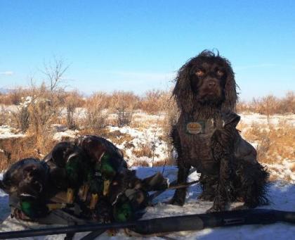 Premier Gundogs Training Kennel