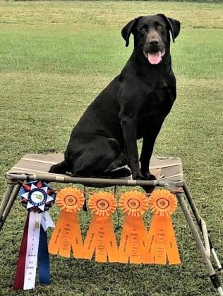 Vanover's Great Plains Labradors