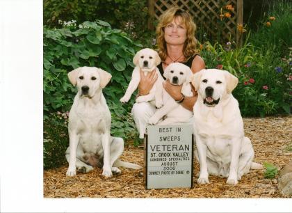 Lakewood labradors