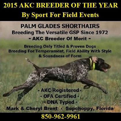 PALM GLADES SHORTHAIRS- ESTABLISHED 1972