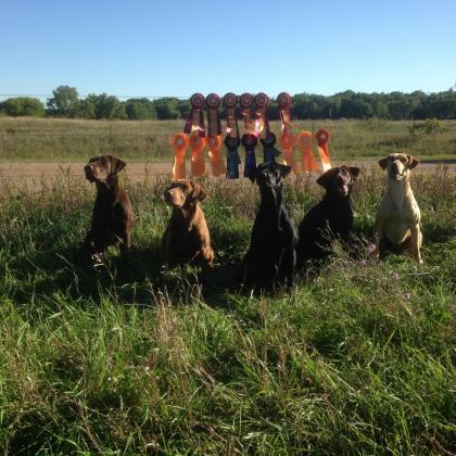 Southern Jamm Retrievers