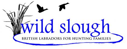 Wild Slough British Labs